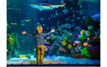 Где купить аквариумы, террариумы и аквариумных рыбок в Москве?