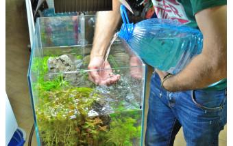 Ошибки начинающих аквариумистов