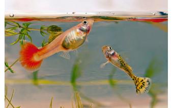 Оптимальные условия для содержания аквариумных рыб