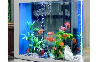Размеры аквариума для количества и типа рыбок