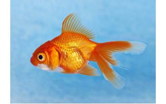 Виды рыб, флора и наполнители для аквариумов