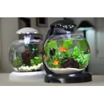 Где купить маленький аквариум?