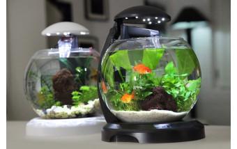 Заводим аквариум. Первые шаги