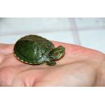 Какая лампа нужна для красноухой черепахи?