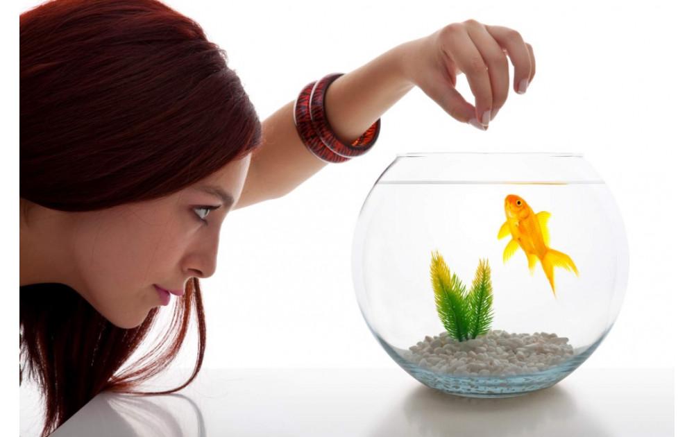 Как правильно кормить рыбок в аквариуме сухим кормом?