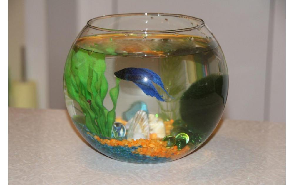 Какие рыбки могут жить без кислорода в маленьком аквариуме?