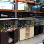 Как купить аквариум на авито?
