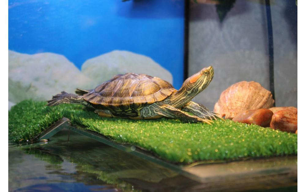 Террариум для красноухой черепахи купить в Москве