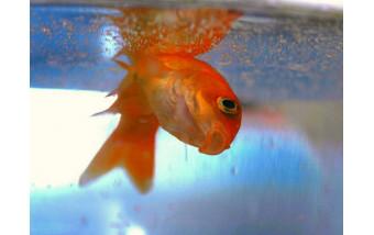 Почему погибли аквариумные рыбки?