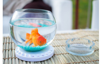 Положительное влияние на здоровье аквариумов