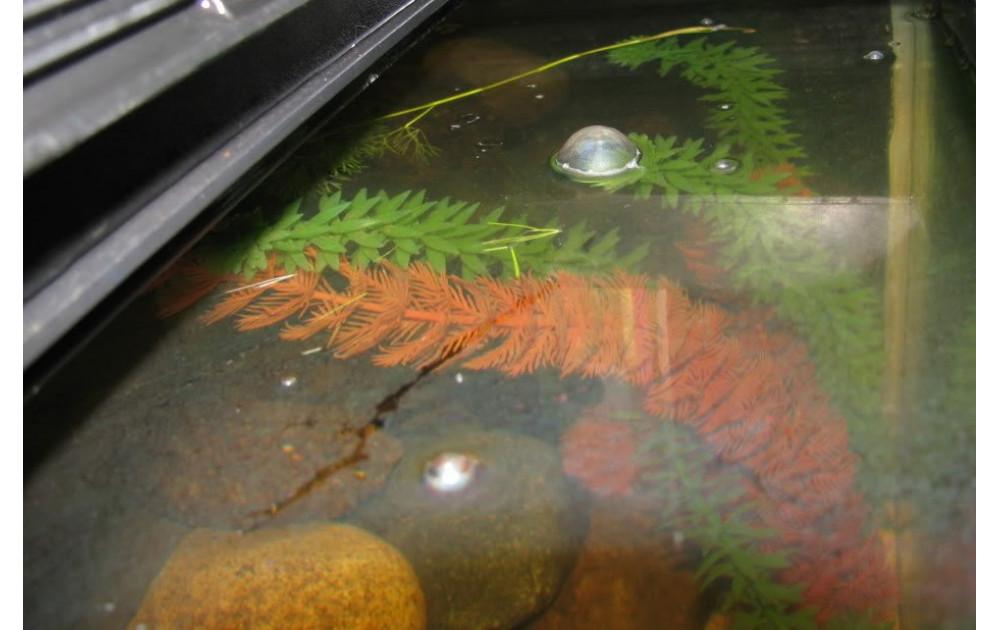 Бактериальная пленка в аквариуме