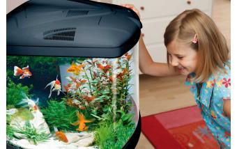 В чём польза аквариумных рыбок и стоит ли их заводить?