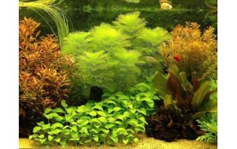 Всё про растения в аквариум