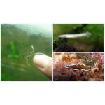 Как избавиться от плоских червей в аквариуме?