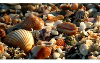 Можно ли укладывать в аквариум морские ракушки