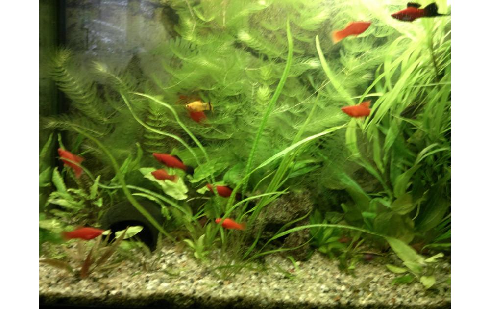 Кормим мальков рыб правильно