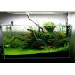 Нужны ли камни и коряги в аквариуме?