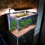 Какая частота замены воды в аквариуме?