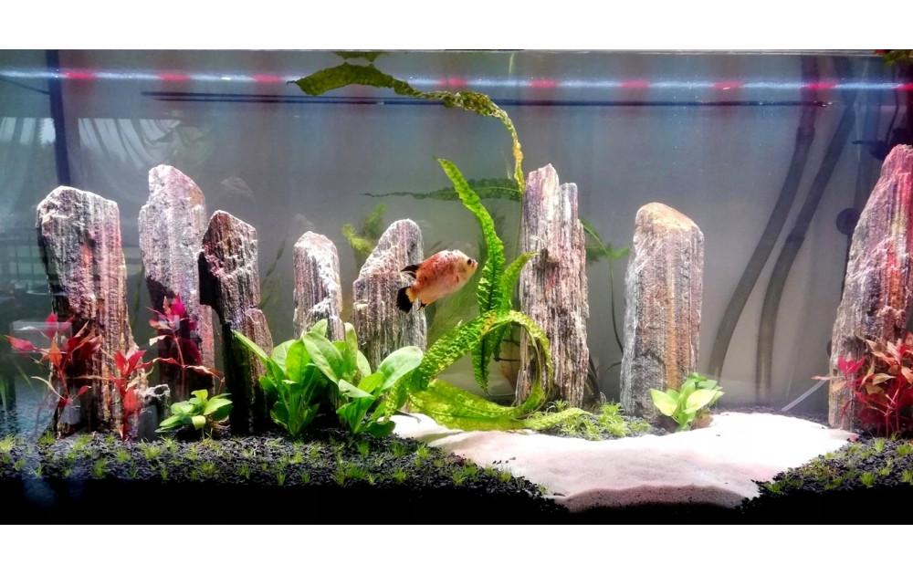 Базовый запуск аквариума от А до Я, для новичков