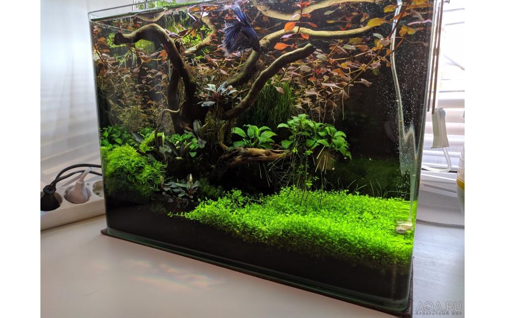 Аквариумные растения: как выбрать, посадить, ухаживать