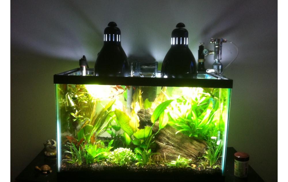 Что делать с аквариумом на время длительного отъезда