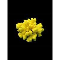 """Коралл крашенный """"Флауэр"""", """"Flower"""" от 1410 руб."""