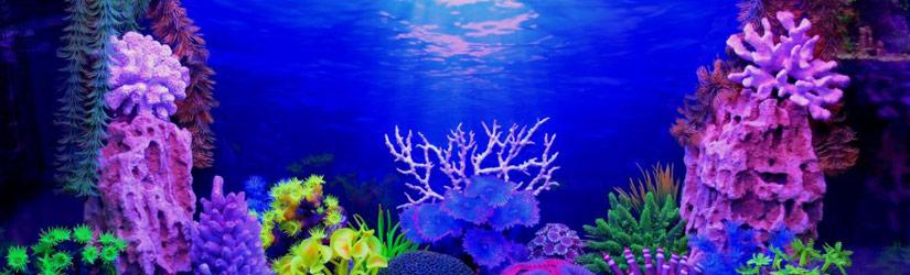 Фон для аквариумов